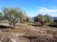 For sale - Rustic Land - Benillup